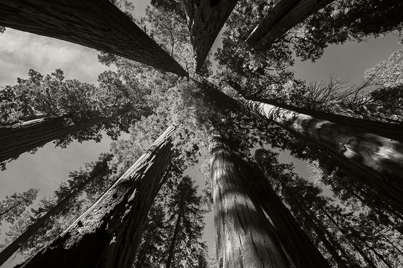 SQ1374 - Sequoia Circle